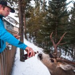 ben herndon banff feeding deere