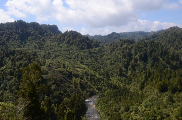 looking down from the 42 Traverse onto the Whanganui River.