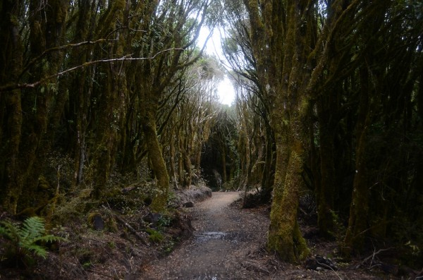 The Timber Trail, an 85km cycleway and hiking trail, at follows Te Araroa for several kilometers.