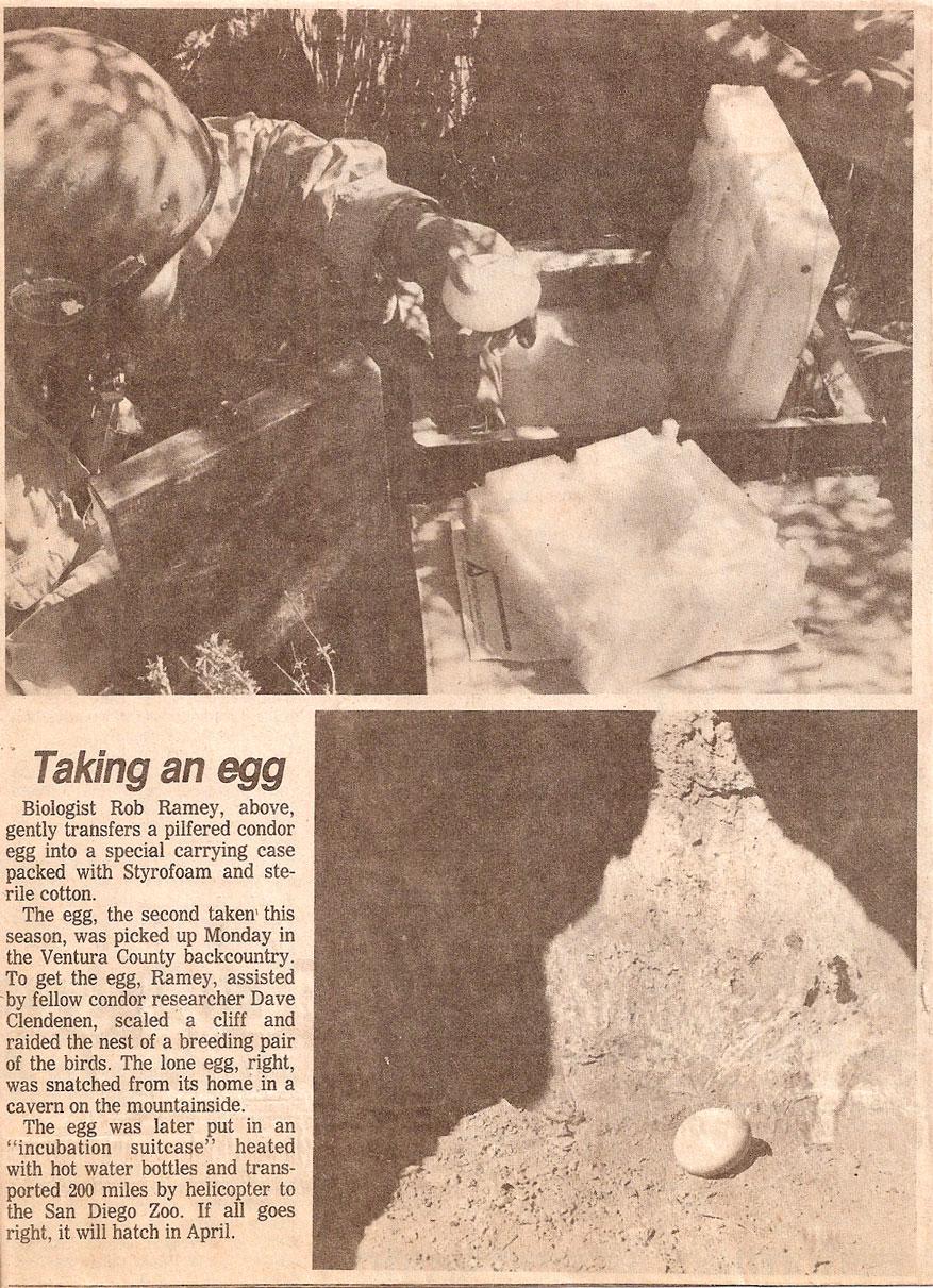 XGK-Stove-California-Condor-Egg-MSR-Blog-newspaper