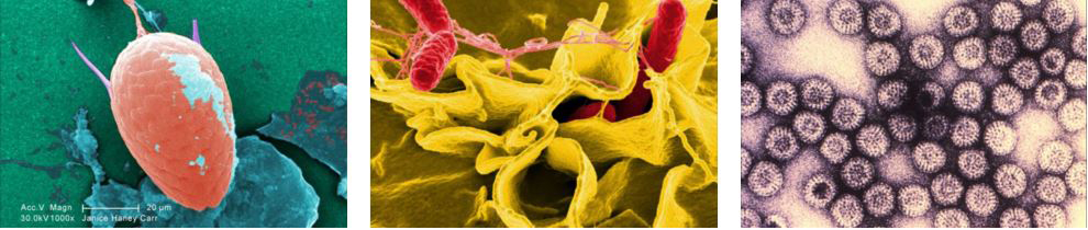 MSR - The Summit Register - Bacteria