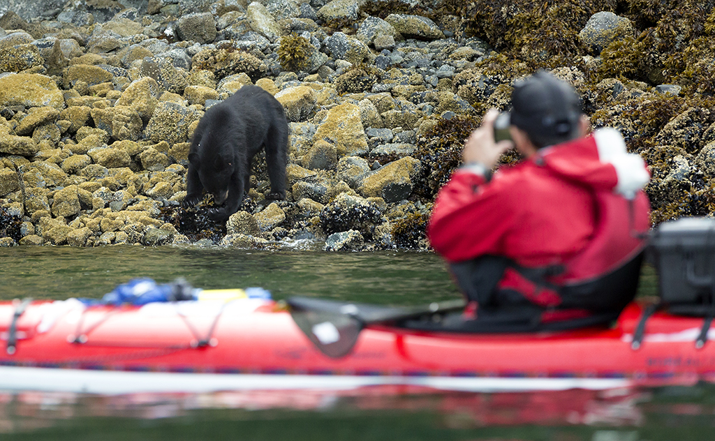 dustin silvey kayak bear sighting