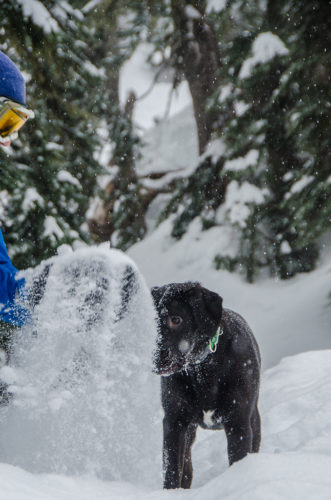 playing in snow with dog