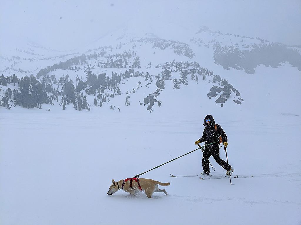 backcountry skiing with dog