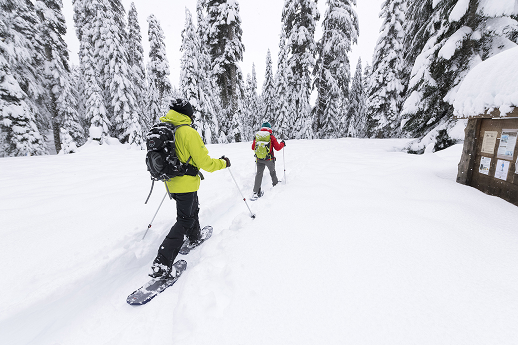 snowshoeing with poles
