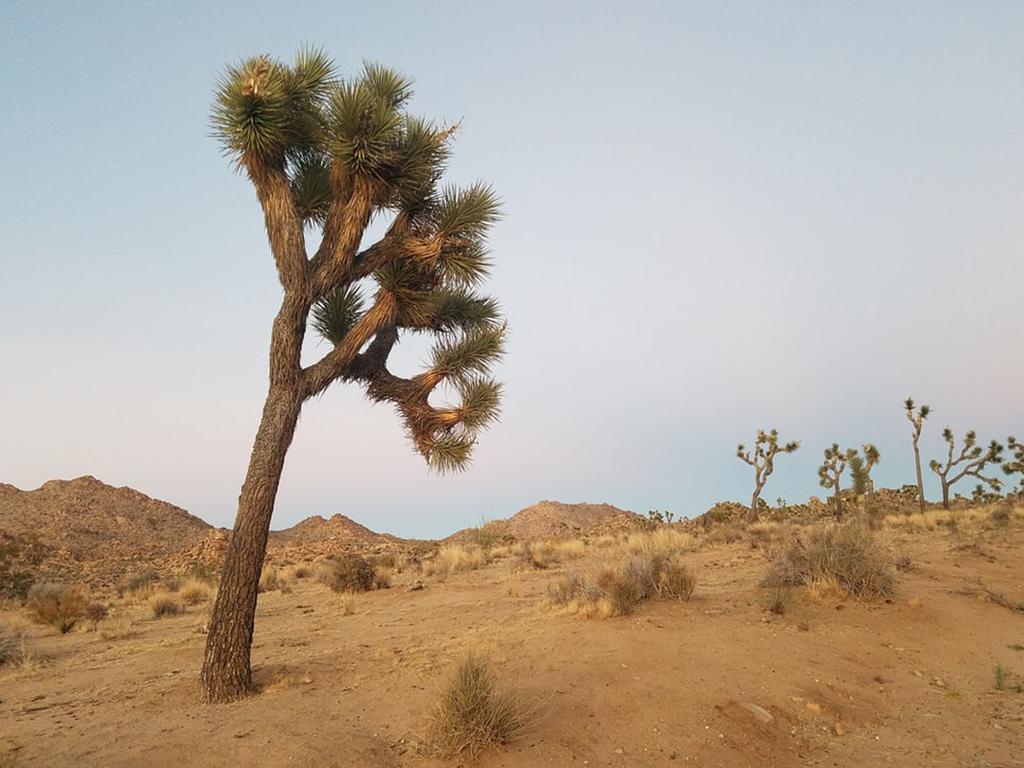 joshua-tree-photo-1542059132167-34f1815e2667_Miranda Jane Pace