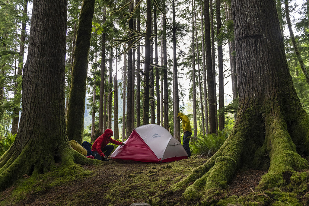 backpacking tent in the woods