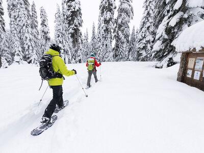 DynaLock™ Trail Backcountry Poles, , large